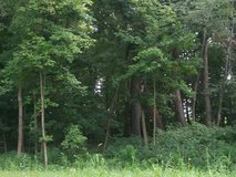 GORGEOUS .75 ACRE WOODED LOT- GOLF COMMUNITY in Plainfield, Illinois